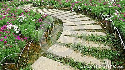 chemin en pierre avec des fleurs photo libre de droits. Black Bedroom Furniture Sets. Home Design Ideas
