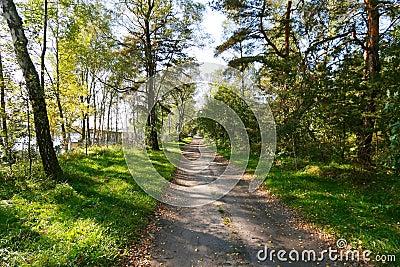 Chemin forestier d automne