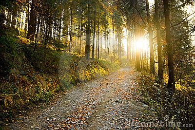 Chemin forestier d automne