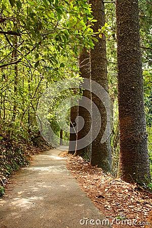 Chemin forestier rayé par arbre