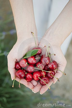 Free Cherries Stock Photography - 31954402