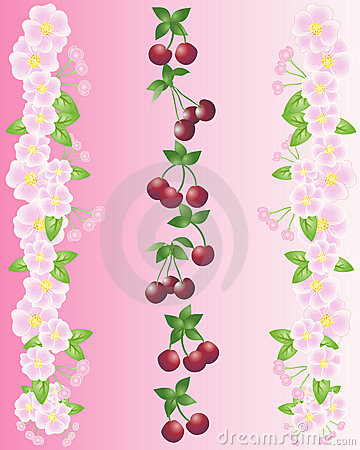 Cherries and blossom