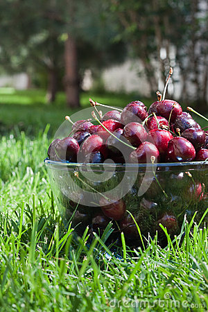 Cherries in a bowl on the grass. Vertical position