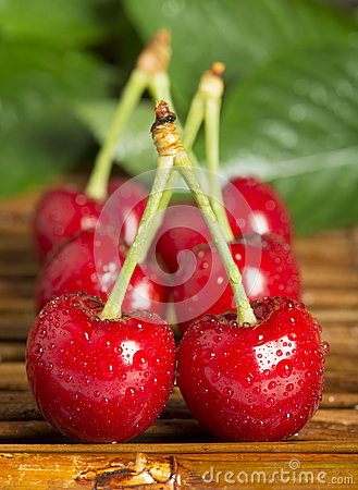 Cherries and branch with leaves