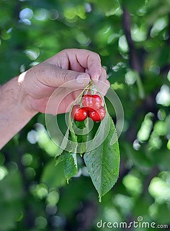 Cherries on hand