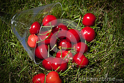 Cherries On The Lawn