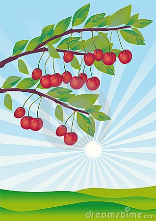Free Cherries Ripened In A Garden Royalty Free Stock Image - 9314016