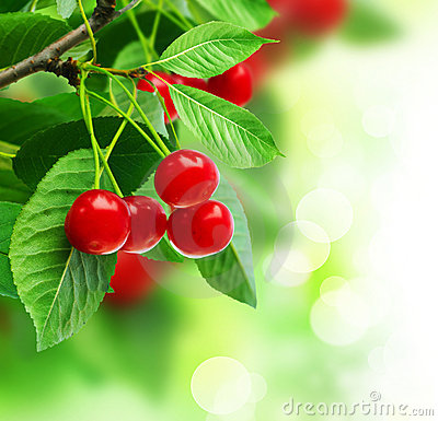 Free Cherry Royalty Free Stock Image - 11635236