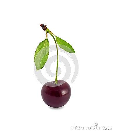 Free Cherry Stock Images - 20383114