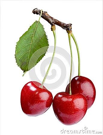 Free Cherry Stock Photos - 5566943