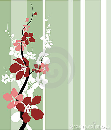 Cherry/apple Blossom
