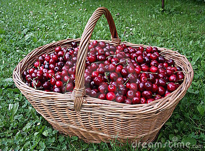 Cherry - basket - fruitage