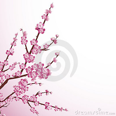 Free Cherry Blossom Stock Images - 9110754