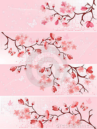 Free Cherry Blossom, Banner. Royalty Free Stock Photos - 13553258