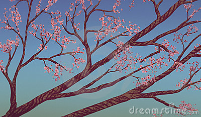 Cherry Blossom Branches - Digital Painting