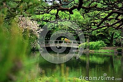 Cherry blossom and bridge