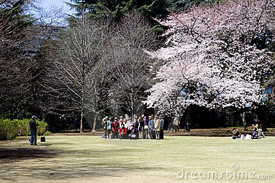 Cherry blossom festival Editorial Photo