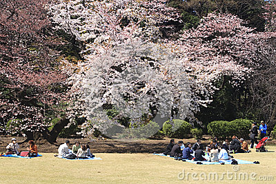 Cherry blossom festival in Tokyo Editorial Photo