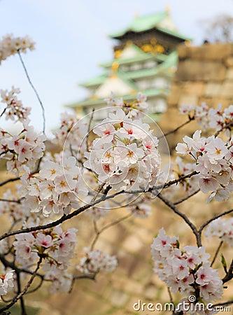 Free Cherry Blossom In Osaka Castle, Osaka, Japan Royalty Free Stock Photo - 49367065