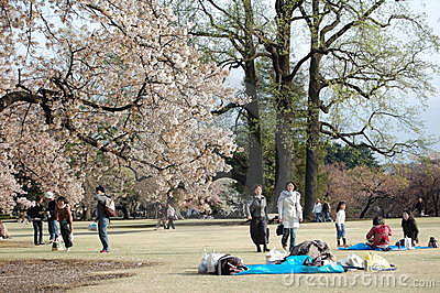 Cherry Blossom in Japan Editorial Photo