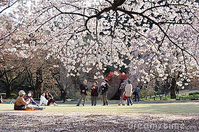 Cherry Blossom in Japan Editorial Photography