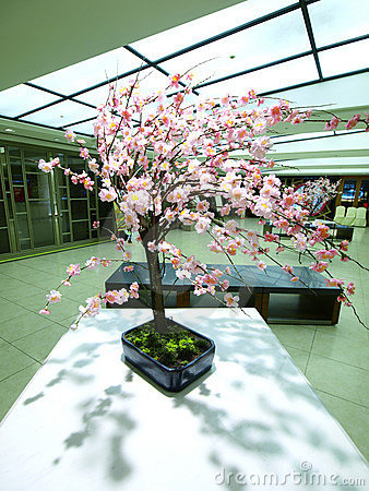 Free Cherry Blossom On Table Royalty Free Stock Photo - 13764525