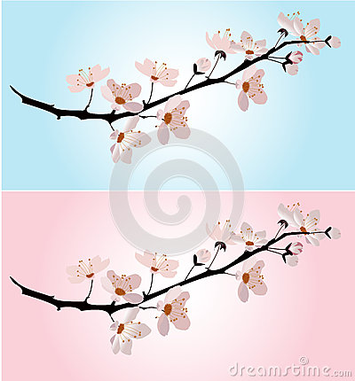 Cherry blossom on pink and blue