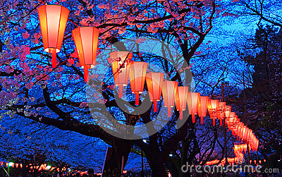 Cherry-Blossom Viewing (O-Hanami) Festival