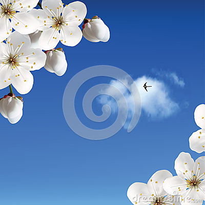 Cherry blossoms against the sky with clouds and sw