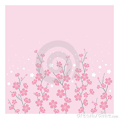 Cherry Blossoms - Horizontal