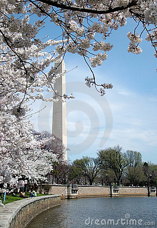 Free Cherry Blossoms In DC Royalty Free Stock Photo - 2186145