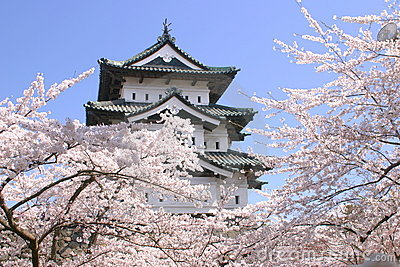 Cherry blossoms and Japanese castle tower