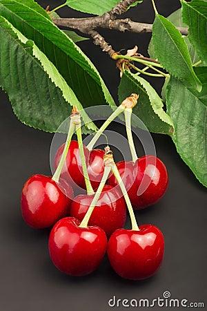 Cherry branch on black background
