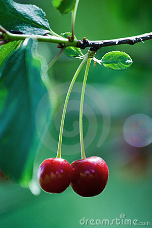 Free Cherry Fruit Stock Images - 2765014