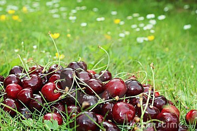 Cherry on grass