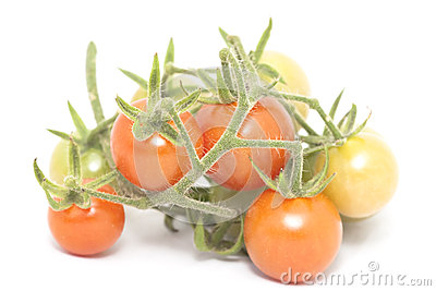 Cherry tomato branch over the white background
