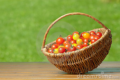 Cherry tomatoes in basket.