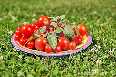 Cherry tomatoes small plate in green grass