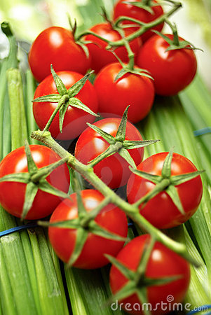 Cherry tomatoes on vine