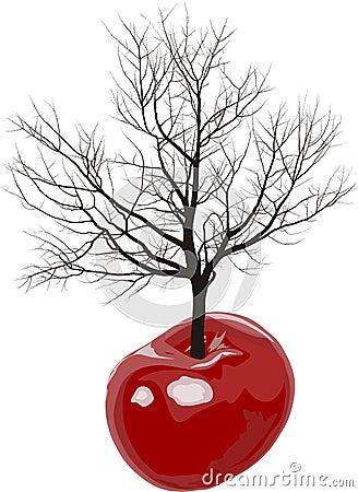 Cherry tree of cherries