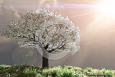 Cherry Tree with God rays