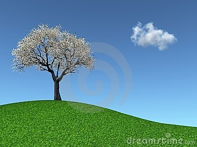 Cherry Tree on a grassy hill