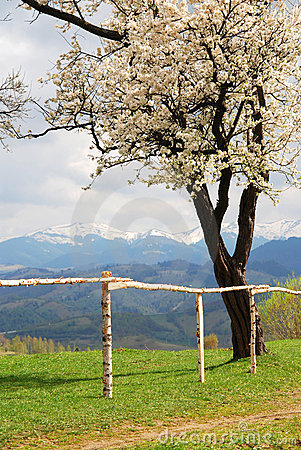 Cherry tree with mountains in the background