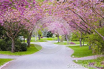 Cherry tree street