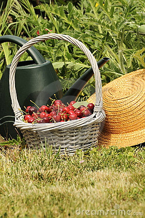 Free Cherrys Garden Royalty Free Stock Images - 21633349
