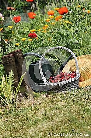 Free Cherrys Garden Royalty Free Stock Image - 21664946