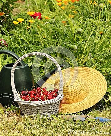 Free Cherrys Garden Stock Images - 23965594
