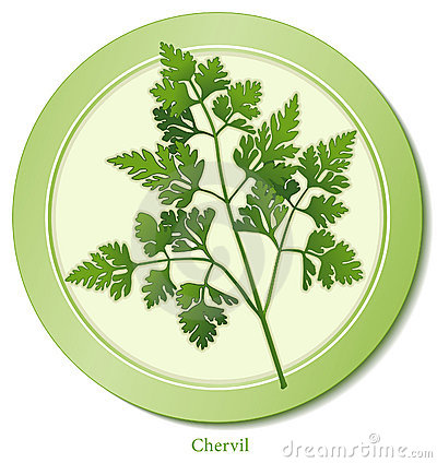 Chervil Herb