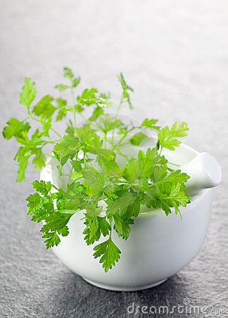 Chervil in a mortar