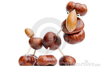 Chestnut animal